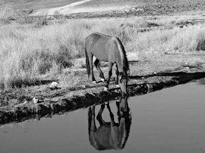 Mustang Along the Mira Loma Creek