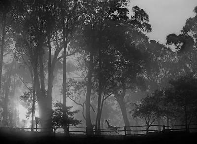 Dawn in the Headlands