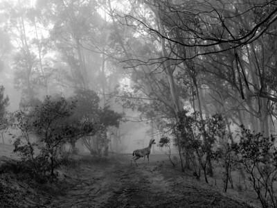 Misty Morning Deer Sighting