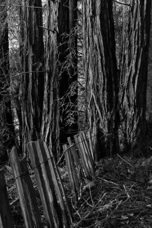 FENCE TO REDWOODS