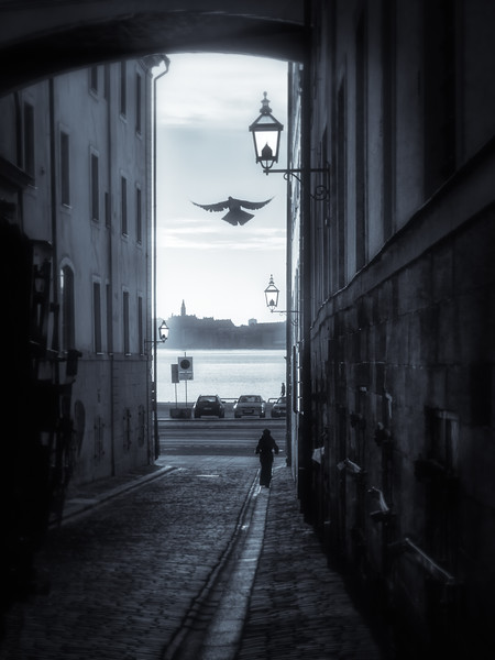 Morning Pigeon