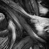 Bristlecone Roots & Rocks