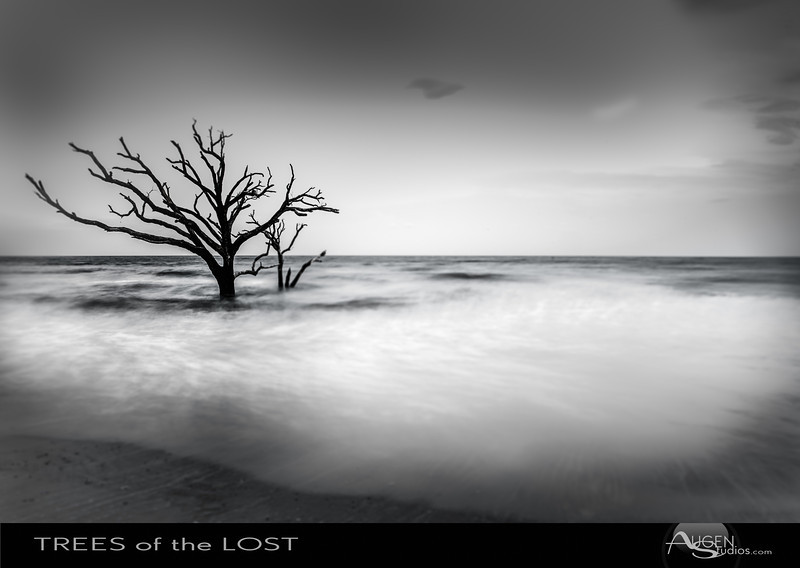 Trees of the Lost