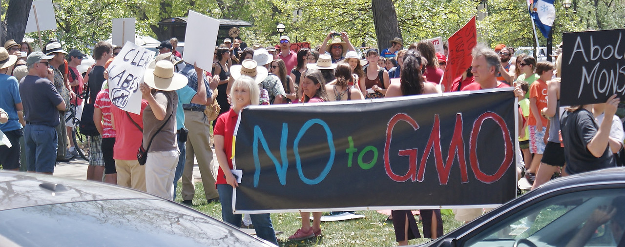 """Protesters hold large """"No To  GMO"""" banner, large group of demonstrators behind them."""