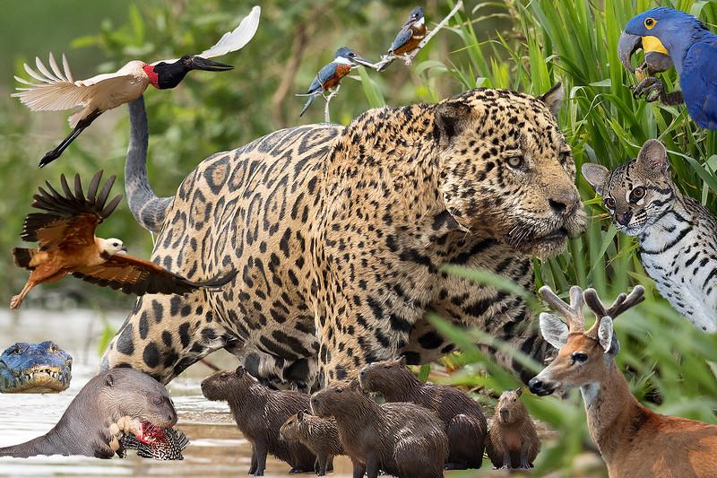PantanalBest B