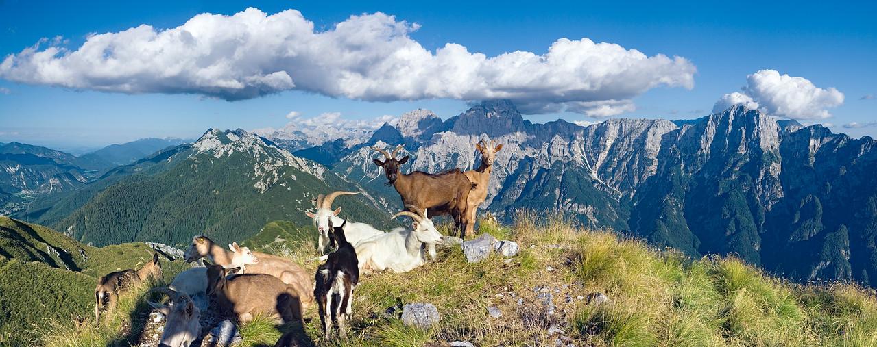 Gruppo dello Jof Fuart e del Montasio, Val Dogna - foto n° 250706-898087