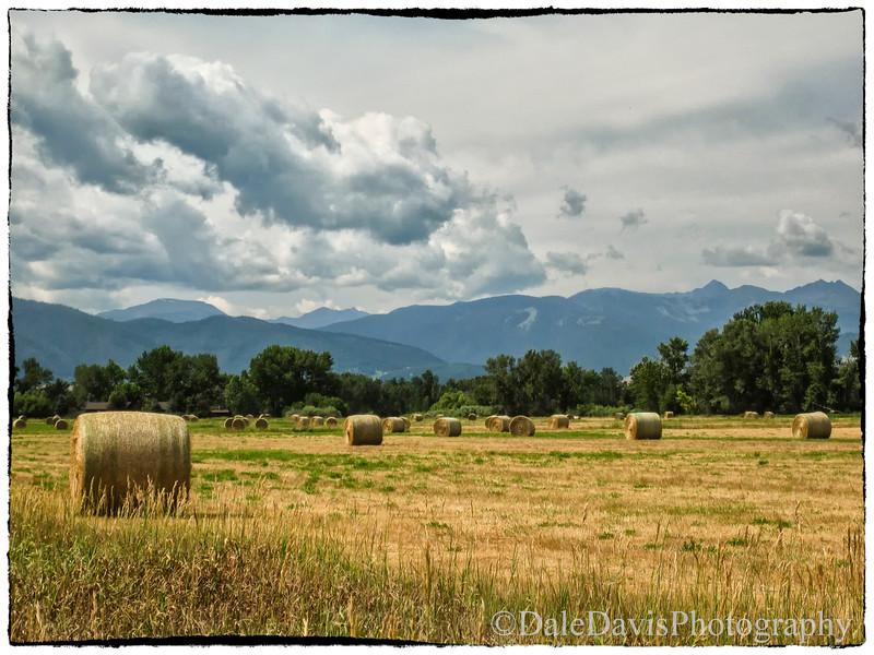 Harvest Time Montana