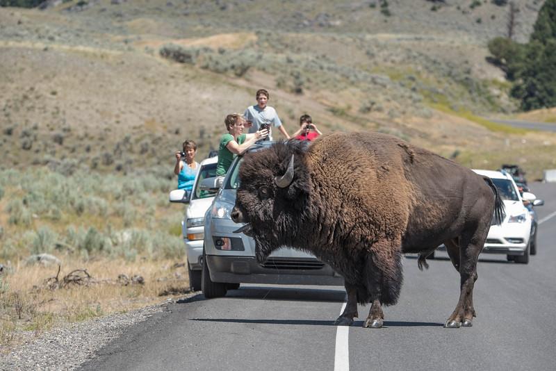 Bison-Big-blocks a car