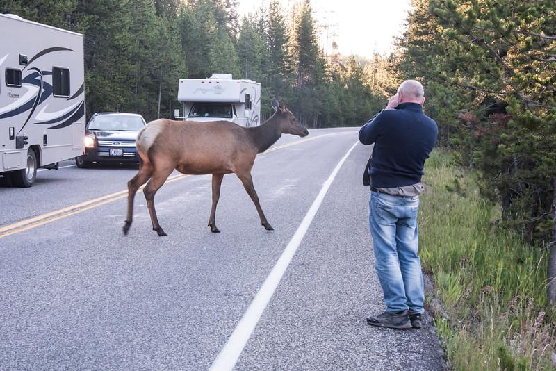 Elk Crossing tourist