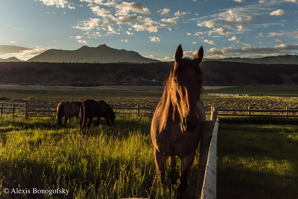 West Creek Ranch - MLR