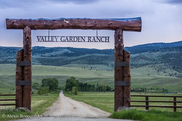 Valley Garden - MLR