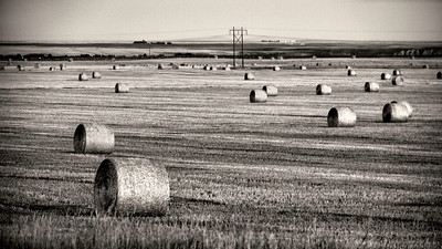 Hay field in Montana