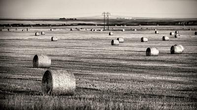 Hay field in Montana