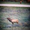 elk 10-16-2014 (247)-300