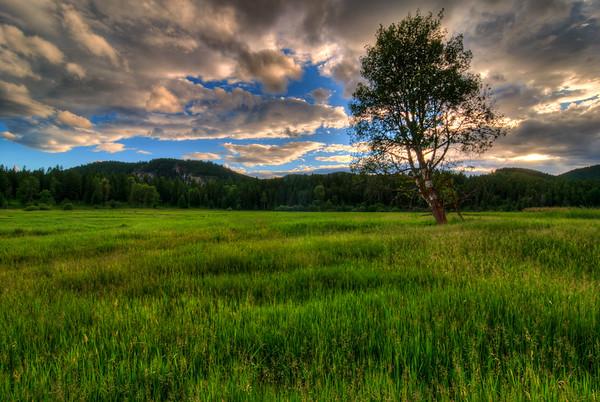 Field of Solitude