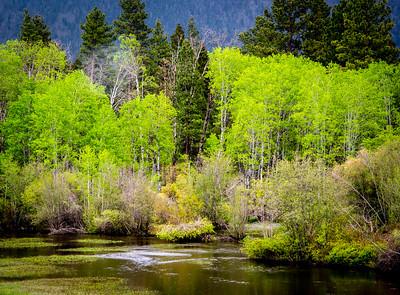 Spring in Montana