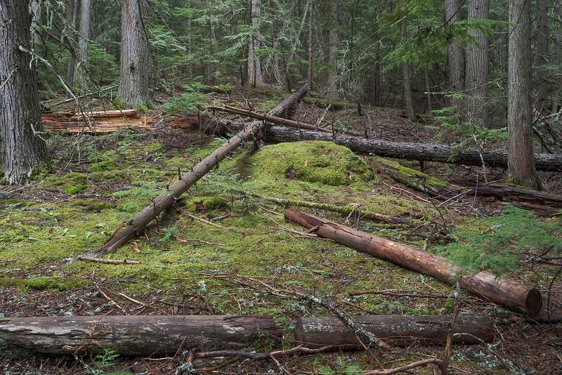 Forest Around Fish Creek Trail