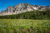 Alpine view with wildlfowers near Swiftcurrent Lake, Glacier National Park, Montana, USA.