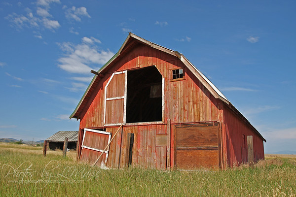 Montana Wheat Farm