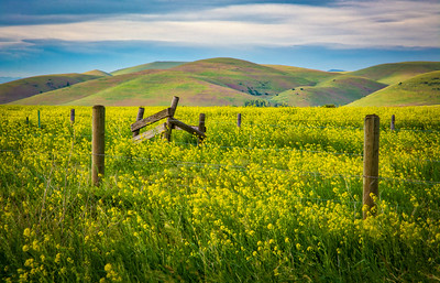 Spring in the Mission Valley, Montana