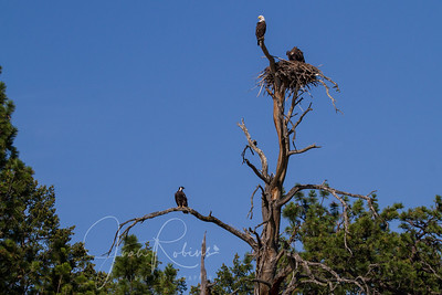 The logistics of flying to the nest are complicated