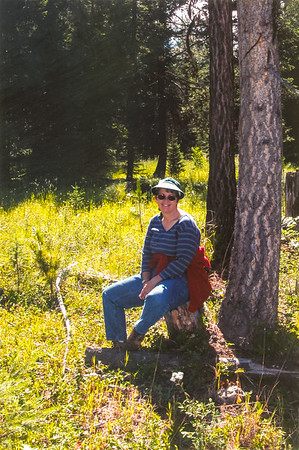 Montana 2003