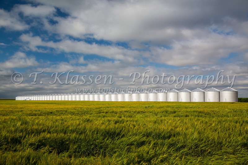 A long row of metal grain bins on a farm field near Kremlin, Montana, USA.