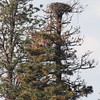 Osprey nest we can see from our dock