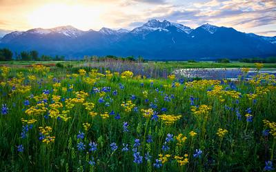 Wildflower Sunrise at Ninepipes
