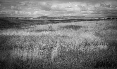 Grasslands of Ninepipes in the Mission Valley