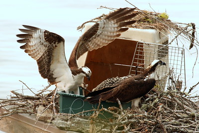 """All three at the """"nest."""" Not a typical sight!"""