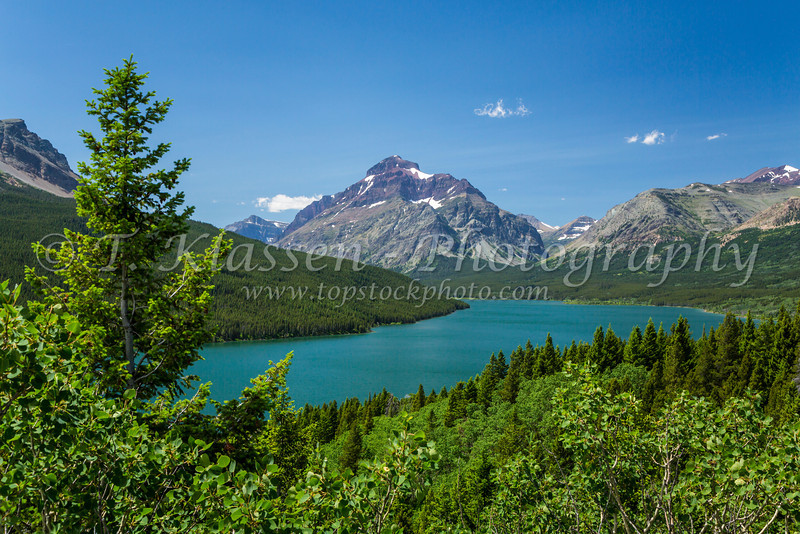 Lower Two Medicine Lake with flowers in Glacier National Park, Montana, USA.