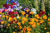 A spring flower patch in Whitefish, Montana, USA.