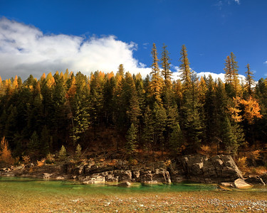 Western Larch and Flathead River, Essex, Montana