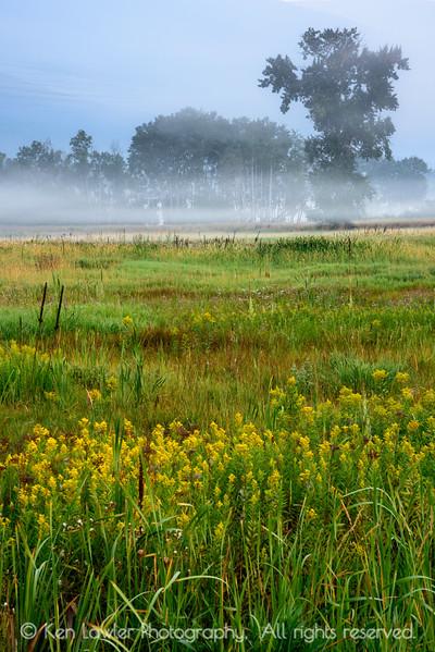 Foggy morning meadow