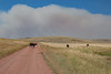 Cattle on Sixteen Mile Creek Road in Meagher County, Montana.  Smoke from the Chinn fire southwest of White Sulfur Springs billows in the distance.