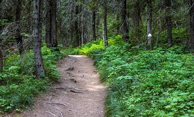 Swiftcurrent Lake Trail, Glacier National Park