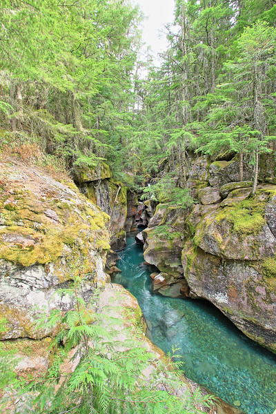 Avalanche Creek in Glacier National Park