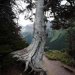 Ptarmigan Trail