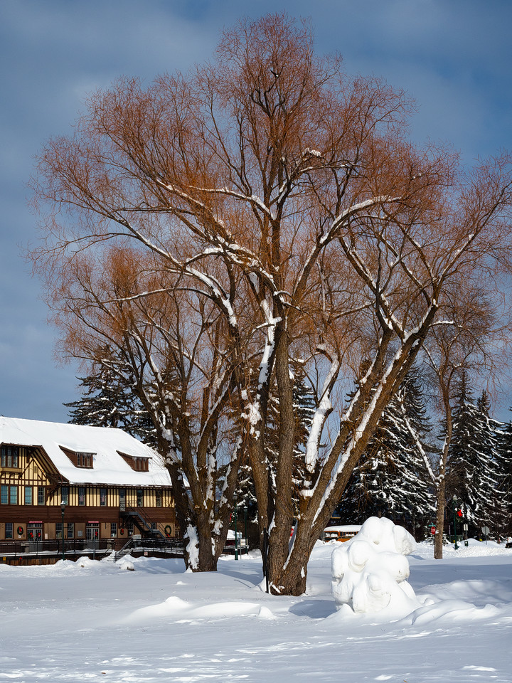 Beautiful Trees , Whitefish Station
