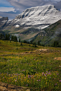 Alpine wildflowers grow in a meadow in Logan's Pass. The famous pass in Glacier National Park is a stop along the Going-to-the-Sun Highway that runs through the middle of the park.  Photo by Kyle Spradley | www.kspradleyphoto.com