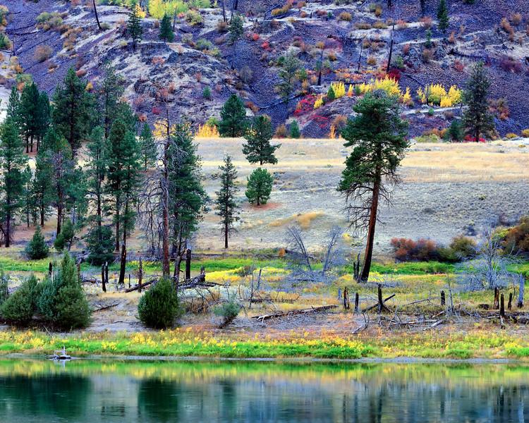 Foliage and Flathead River, Sanders County, MT
