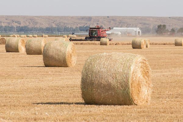 Farming in Treasure Co.