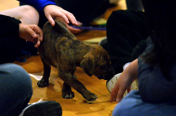 12/07/17  Puppy Playtime at Knapp Elementary C.A.R.E. Club