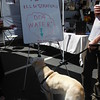Ghost stops for a drink of water at a pet-friendly booth during Roxborough's Art is Life festival.  Eric Fitzsimmons — Digital First Media