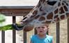 A young boy stares  as Dhoruba uses his long tongue to grasp a leaf of lettuce at the Giraffe Welcome Home Party at the Elmwood Zoo, May 28, 2016.  / BOB RAINES--DIGITAL FIRST MEDIA