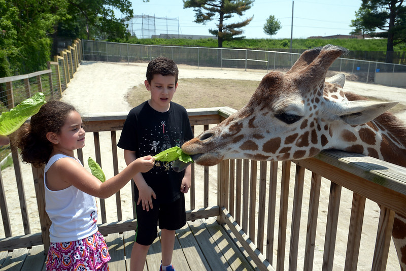 Sofia and Santiago Martinez feed lettuce to Dhoruba at the Giraffe Welcome Home Party at the Elmwood Zoo, May 28, 2016.   / BOB RAINES--DIGITAL FIRST MEDIA