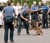 Horsham K-9 Officer Andrew D'Arcy plays the bad guy as Horsham K-9 Officer Kate Ryan puts her rookie partner, Gallant, through his paces at the Horsham Night Out Aug. 2, 2016 / BOB RAINES--DIGITAL FIRST MEDIA