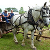A pair of draught horses pulls a farm wagon full visitors at the Goschenhoppen Folk Festival Aug. 12, 2016.  |  BOB RAINES--DIGITAL FIRST MEDIA