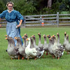 Victoria Marks herds geese at the Goschenhoppen Folk Festival Aug. 12, 2016.  |  BOB RAINES--DIGITAL FIRST MEDIA